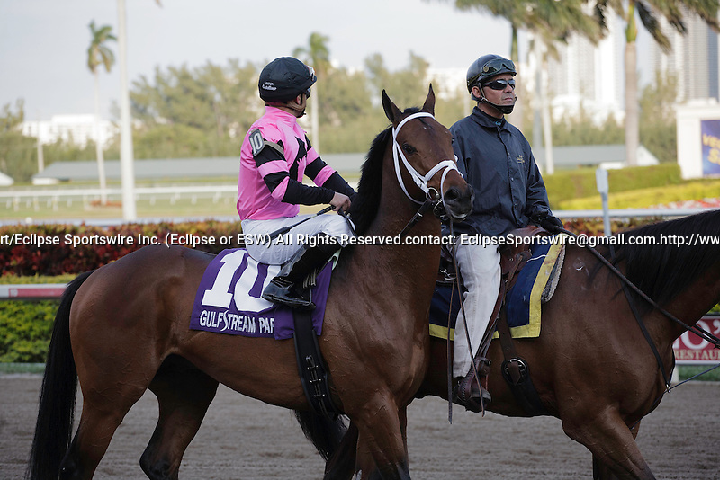 Silver Medallion with jockey Javier Castellano on post parade before winning the Ft Lauderdale Stakes(G3T) at Gulfstream Park. Hallandale Beach, Florida. 01-14-2012
