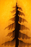 Pine Tree Abstract