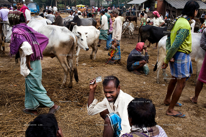 Amin Hussain (center with money in hand), discuss with other men who gather to buy and sell cattle at the weekly cattle market that happens in Birohi, a town close to the India-Bangladesh Border, in Nadia district, West Bengal, India, on 19th January, 2012. The larger cows, priced at almost INR 10,000 (USD 190) each are often smuggled across the porous borders by wading across the rivers to be sold at a profit in Bangladesh. Recently, a torture video of a captured cattle smuggler surfaced on the internet, provoking outrage at the high-handedness of the Indian Border Security Force. Photo by Suzanne Lee for The National (online byline: Photo by Szu for The National)