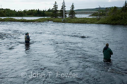 Fly fishing for Atlantic Salmon, Big East River, Newfoundland, Canada