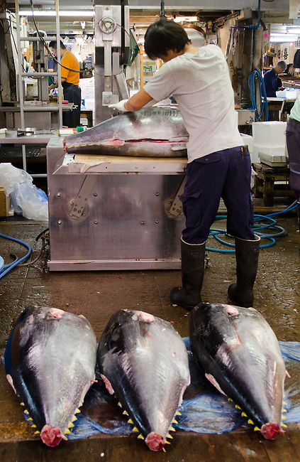 Fish butcher cutting tuna, with large tuna waiting to be prepared at Tsukiji Fish Market Tokyo Japan