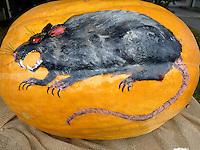 Fierce rat painted on huge pumpkin to decorate pumpkin festival, Maine, USA