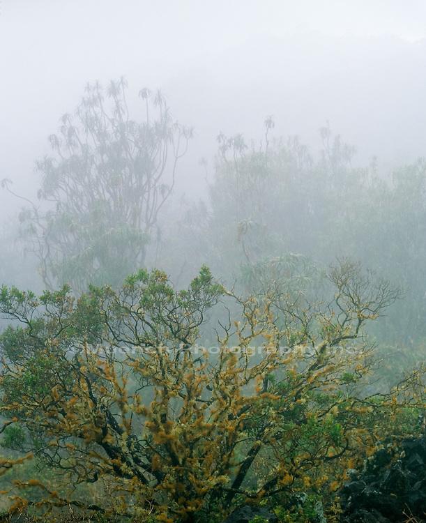 Ulupalakua Lava Fields, Maui, HAWAII