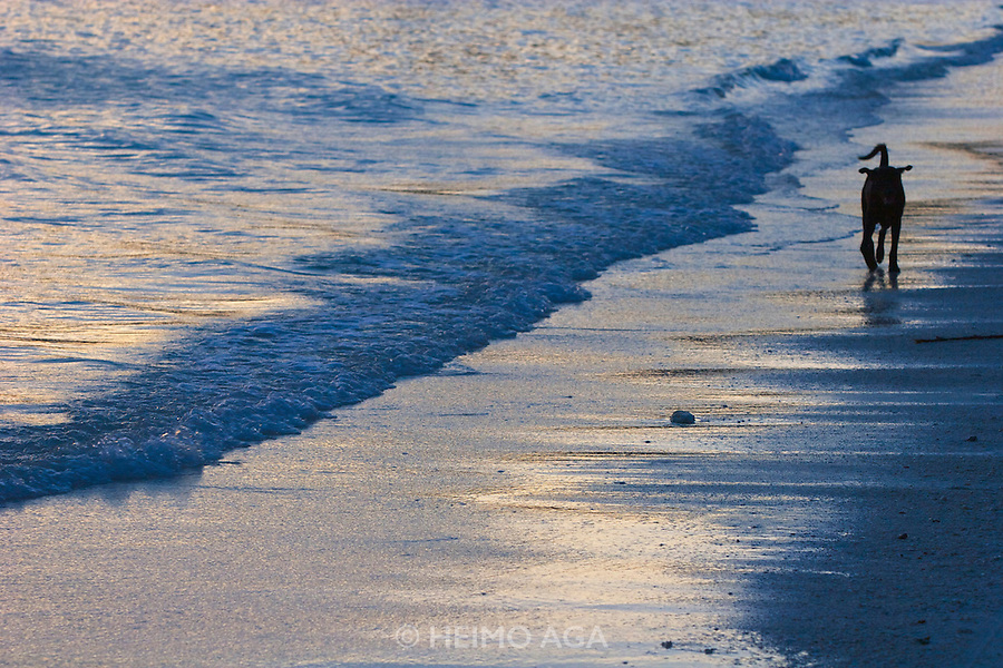 Pattaya Beach. Lone beach dog at sunset.