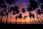 Sunset and palm trees, Chuuk (Truk) Lagoon, Micronesia.