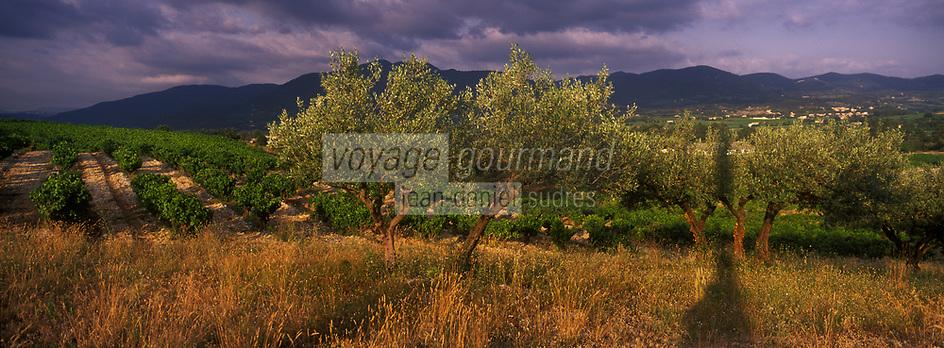 Europe/France/Rhône-Alpes/26/Drôme/Env de Vinsobres: le vignoble AOC Côtes du Rhône- Vigne et oliviers