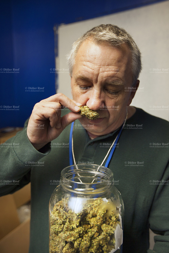 USA. Washington state. Seattle. Ben Smith is smelling Freezeland buds from a glass jar at AuricAG. After drying, the marijuana stems are trimmed off and the pot is stored in glass jar to dry it further. Freezeland is an indica cross between Pluton and Friesland. These lavender-tipped buds have a fruity citrus flavor with pine undertones and potent full-body indica effects. AuricAG is a licensed producer and processor of Marijuana in Washington State. AuricAG is authorized, according to cannabis legalization in Washington State, to supply only licensed Washington State retail store fronts. AuricAG offers a wide array of strains that encompass the recreational aspect of the market as well as the medical market. Cannabis, commonly known as marijuana, is a preparation of the Cannabis plant intended for use as a psychoactive drug and as medicine. Pharmacologically, the principal psychoactive constituent of cannabis is tetrahydrocannabinol (THC); it is one of 483 known compounds in the plant, including at least 84 other cannabinoids, such as cannabidiol (CBD), cannabinol (CBN), tetrahydrocannabivarin (THCV), and cannabigerol (CBG). 13.12.2014 © 2014 Didier Ruef