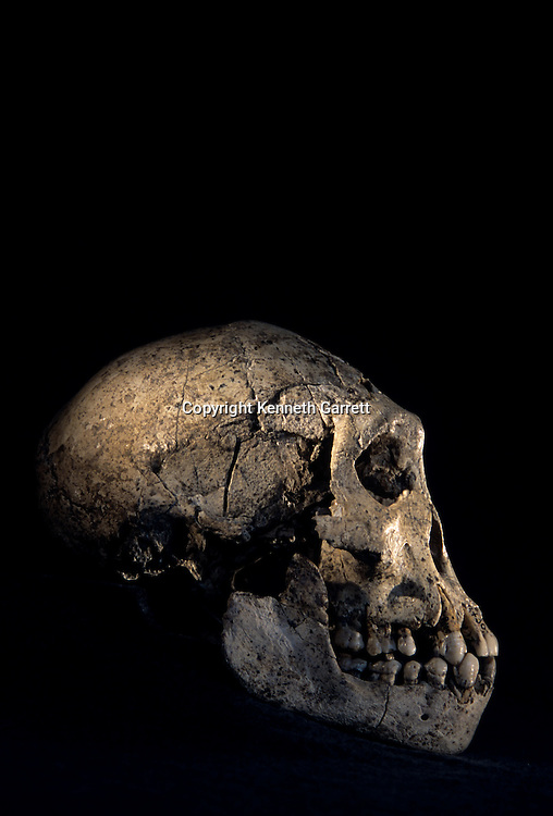 Skull found at Dmanisi, Dmanisi, Georgia, Homo erectus site, 1.8 million year old hominins,Homo erectus; Georgia; Human Evolution; bone; skull; skeleton; artifact; Dmanisi; profile; Republic of Georgia; David Lordkipanidze,Homo erectus site, 1.8 million year old, hominins,hominid
