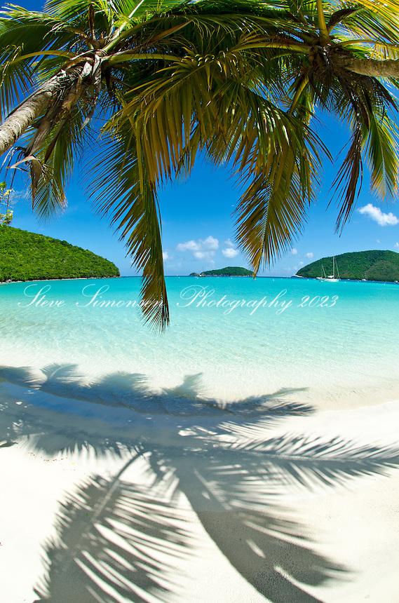 Palm trees at Maho Bay<br /> Virgin Islands National Park<br /> St. John, U.S. Virgin Islands