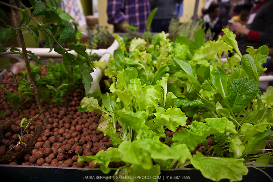 Simple aquaponics system: Outdoor aquaponic systems