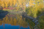 Idaho, Boundary County, Bonners Ferry. Autumn reflections and fog on Deep Creek, a tributary to the Kootenai River.