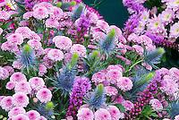 Liatris spicata, Chrysanthemum, Eryngium 'Super Nova Straight' flower floral arrangement in blue and pink color tones