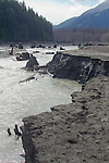 Elwha River Restoration, Elwha Dam removal, March 16, 2012, emptied reservoir, Lake Aldwell, Largest dam removal project in US history, Olympic National Park, Olympic Peninsula, Washington State, Pacific Northwest, USA, North America,