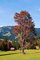 Alpine farm fields in autumn at the Oberjoch Pass on the German - Austrian Border