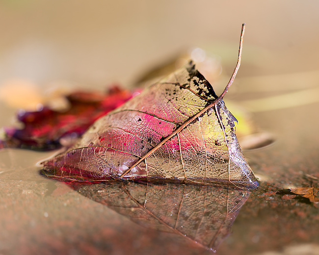 The beauty of fallen autumn leaves