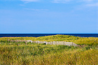 Dune fence, Cape Cod National seashore, Cape Cod, Massachusetts, USA
