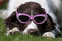 2015_03_14_SUNGLASSES_DOG