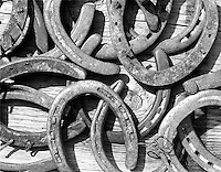 4x5 B&W polaroid image of a bunch of old horseshoes piled onto an old wooden barn plank. The sun is raking over the scene throwing a hard shadow.