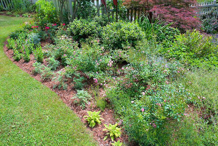Mulched garden bed with pink rosa roses perennials ornamental grass