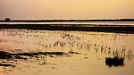 Southport: Marshside