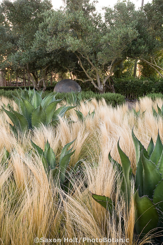 Oehme Van Sweden drought tolerant summer-dry demonstration garden with grasses (Stipa tenuissima) and Agave at Cornerstone Gardens, Sonoma, California.