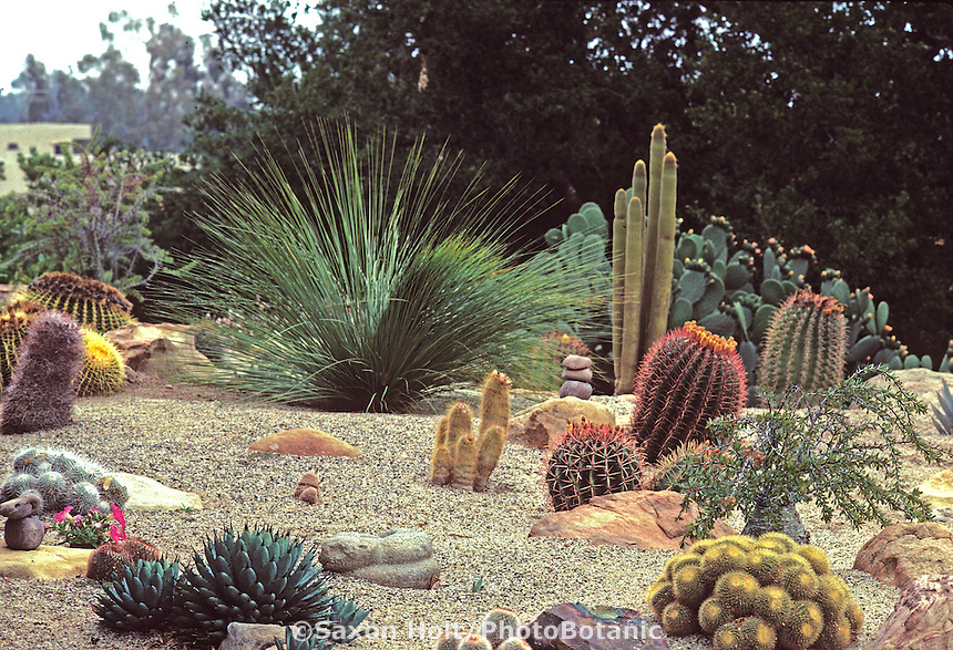 Landscaping With Rocks And Cactus Black goldcreate a rock garden