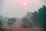 Early morning sunrise and mist, Bandhavgarh National Park.India....
