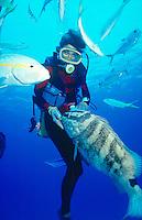 MARINE LIFE: BOAT, REEFS &amp; DIVERS<br /> Nassau grouper and diver.