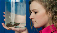 BNPS.co.uk (01202 558833)<br /> Pic: TomWren/BNPS<br /> <br /> Hannah Butt from Blue Reef Aquarium checks over the Sea Mouse.<br /> <br /> An exceptionally rare and brightly-coloured sea mouse that live buried 3,000 metres below sea level have washed up alive up on a UK beach. <br /> <br /> The bizarre-looking worm was flung ashore after being caught up in currents and waves following a storm that stirred up sediment on the seabed. <br /> <br /> An aquarist walking along Southsea Beach in Portsmouth, Hants, spotted the recognisable red spines, which appear to change colour as light moves across them. <br /> <br /> It were carried a few hundred yards to the city's Blue Reef Aquarium to live among sea anemones and starfish.