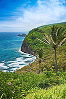 coconut palm trees and Pololu Beach, Pololu Valley, North Kohala, Big Island, Hawaii, Pacific Ocean