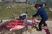 Men slaughtering a cow, Vietnam