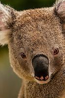 Sydney-Taronga Zoo