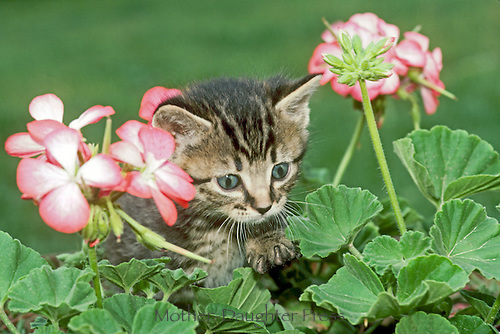 Good Tuesday morning  A07061-Kitten-with-geraniums-Edit
