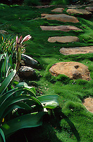 Tufted Korean (Zoisya tehnifolia) Grass growing around granite stepping stones with Crinums - an indigenous South African lily.