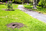 Waterbury, CT- 14 May 2017-051417CM03- An empty plant bed is shown in Fulton Park on Sunday.  According to police vandals removed some of the newly planted lilac plants and destroyed others.   Christopher Massa Republican-American