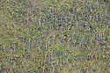 Bolivia, Beni Department, aerial view of  palm tree forest