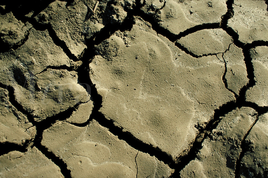 close up of dried, cracked mud, showing heart shape.