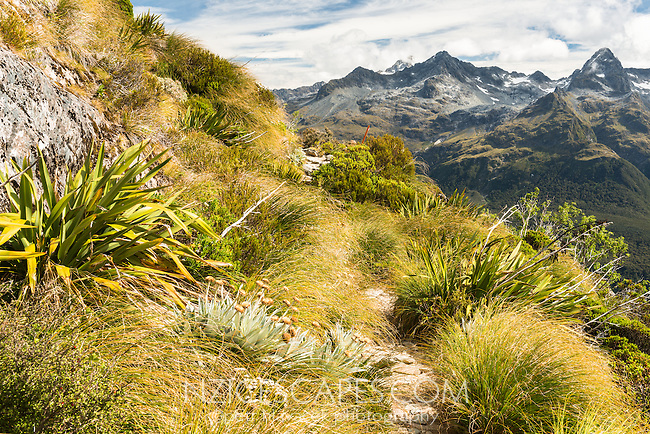 Fields of alpine vegetation on western slopes of Ailsa Mountains on Routeburn Track. Darran Mountains on right, Fiordland National Park, UNESCO World Heritage Area, Southland, South Island, New Zealand, NZ