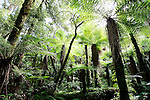 Whirinaki Forest, North Island, New Zealand