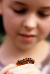 Young girl ( 9 years old) observing caterpillar on her hand Bothell Washington State USA