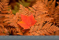 Stock photo of Autumn foliage