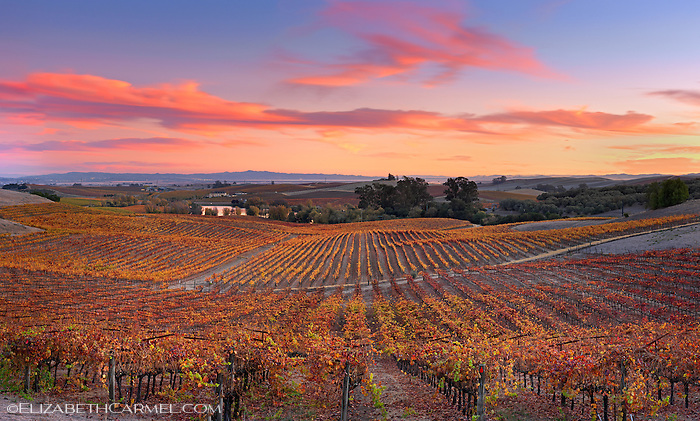 Wine Country Colors