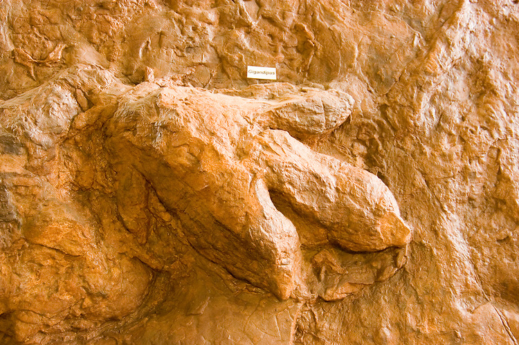 Dinosaur tracks at Dinosaur Discovery site, Johnson Farm, St. George, Utah, UT, negative impression track of dinosaur, gigandipus, exhibit, fossil, fossilized, Southwest America, American Southwest, US, United States, Image ut392-17713, Photo copyright: Lee Foster, www.fostertravel.com, lee@fostertravel.com, 510-549-2202