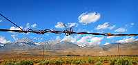 Barbed Wire (hwy 395)