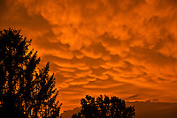 Mammatus clouds at sunset, Kentucky, USA