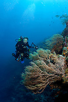 Dr. Sylvia Earle diving off the coast of Honduras.