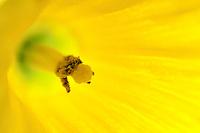 Macro shot of a yellow flower.