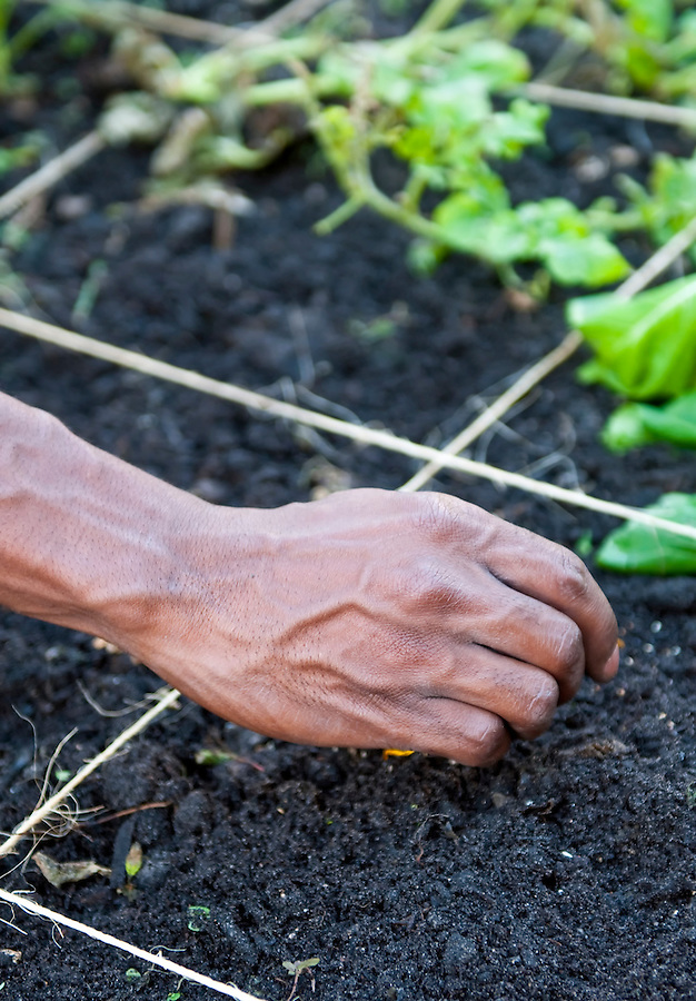 Close up of hands working in a garden puting seeds in soil.