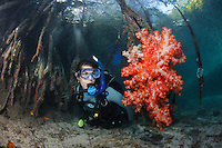 qp1902-D. Scuba diver (model released) explores rarely seen mangrove habitat. Here a soft coral (Dendronephthya sp.) is attached to mangrove's roots. Indonesia, tropical Indo-Pacific Ocean.<br /> Photo Copyright &copy; Brandon Cole. All rights reserved worldwide.  www.brandoncole.com<br /> <br /> This photo is NOT free. It is NOT in the public domain. This photo is a Copyrighted Work, registered with the US Copyright Office. <br /> Rights to reproduction of photograph granted only upon payment in full of agreed upon licensing fee. Any use of this photo prior to such payment is an infringement of copyright and punishable by fines up to  $150,000 USD.<br /> <br /> Brandon Cole<br /> MARINE PHOTOGRAPHY<br /> http://www.brandoncole.com<br /> email: brandoncole@msn.com<br /> 4917 N. Boeing Rd.<br /> Spokane Valley, WA  99206  USA<br /> tel: 509-535-3489