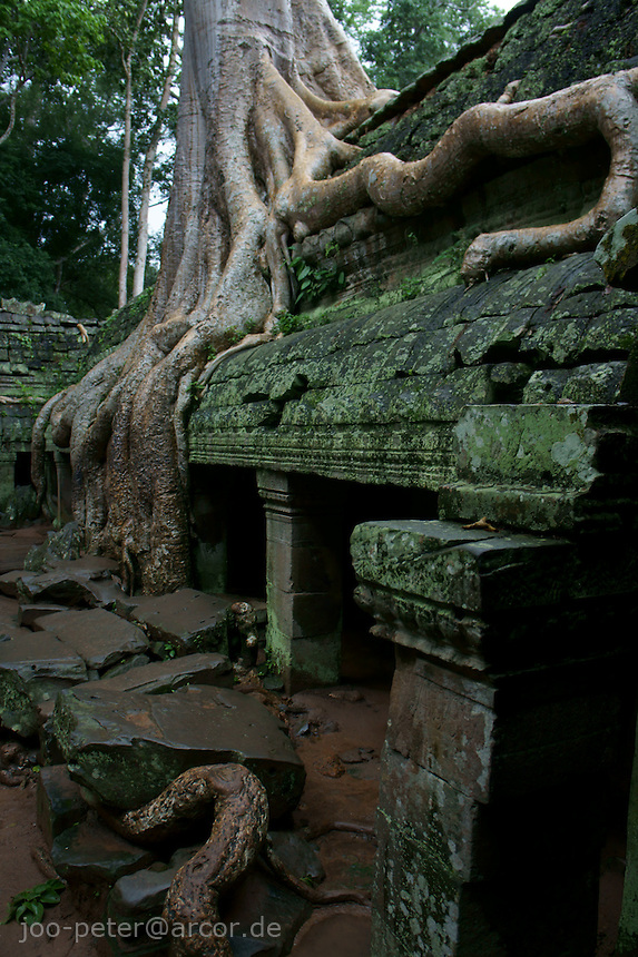 roots of trees growing over ruins of Bantheay Kdei temple, Angkor Wat, Cambodia, August 2011